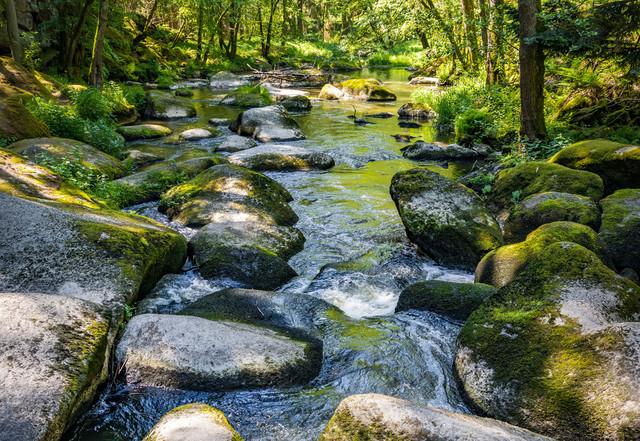 Erlebniswelt Wald & Täler - Waldnaabtal