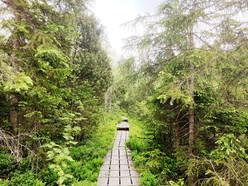 Klosterfilz im Nationalpark Bayerischer Wald