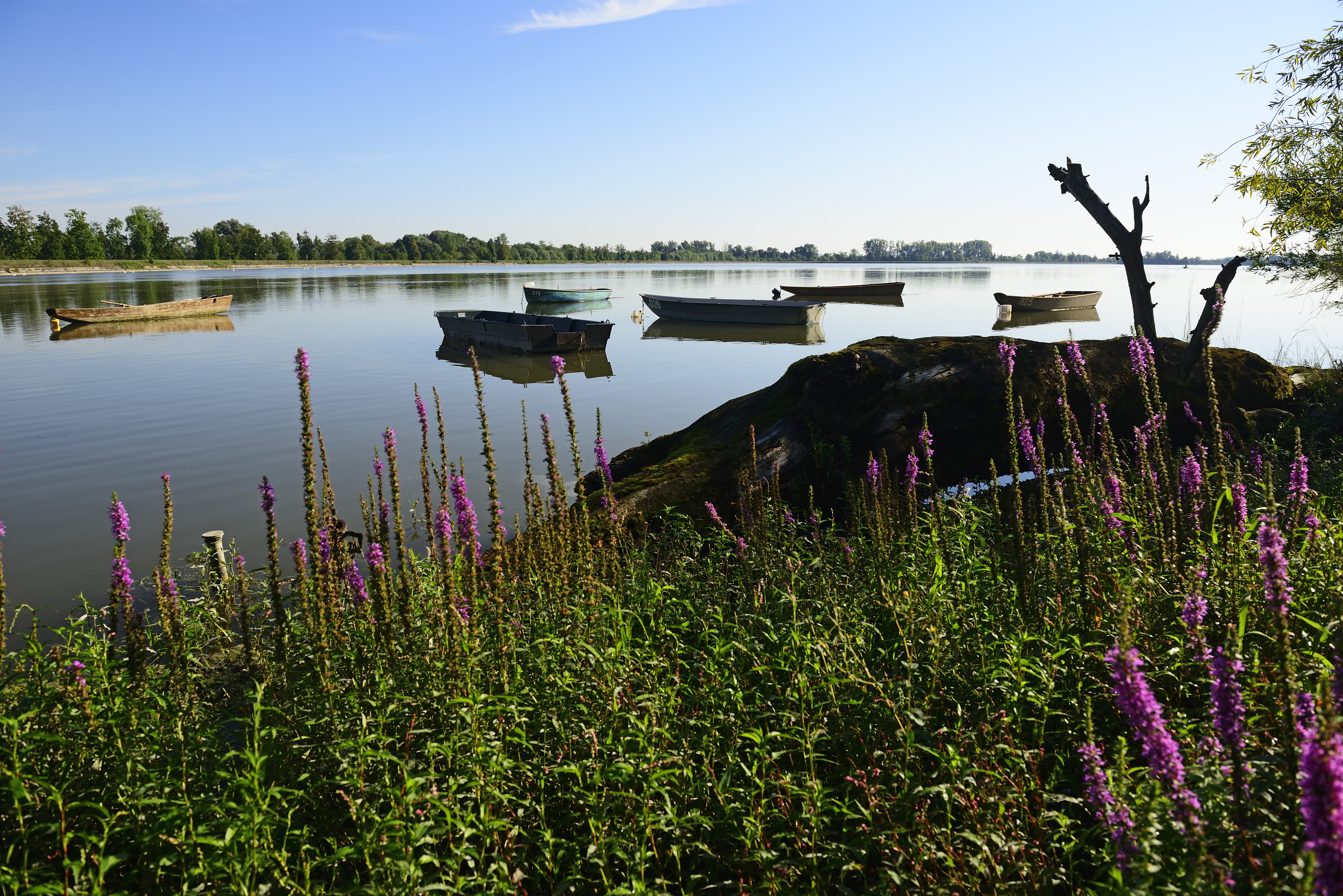 Boote auf dem Wasser im Europareservat Unterer Inn