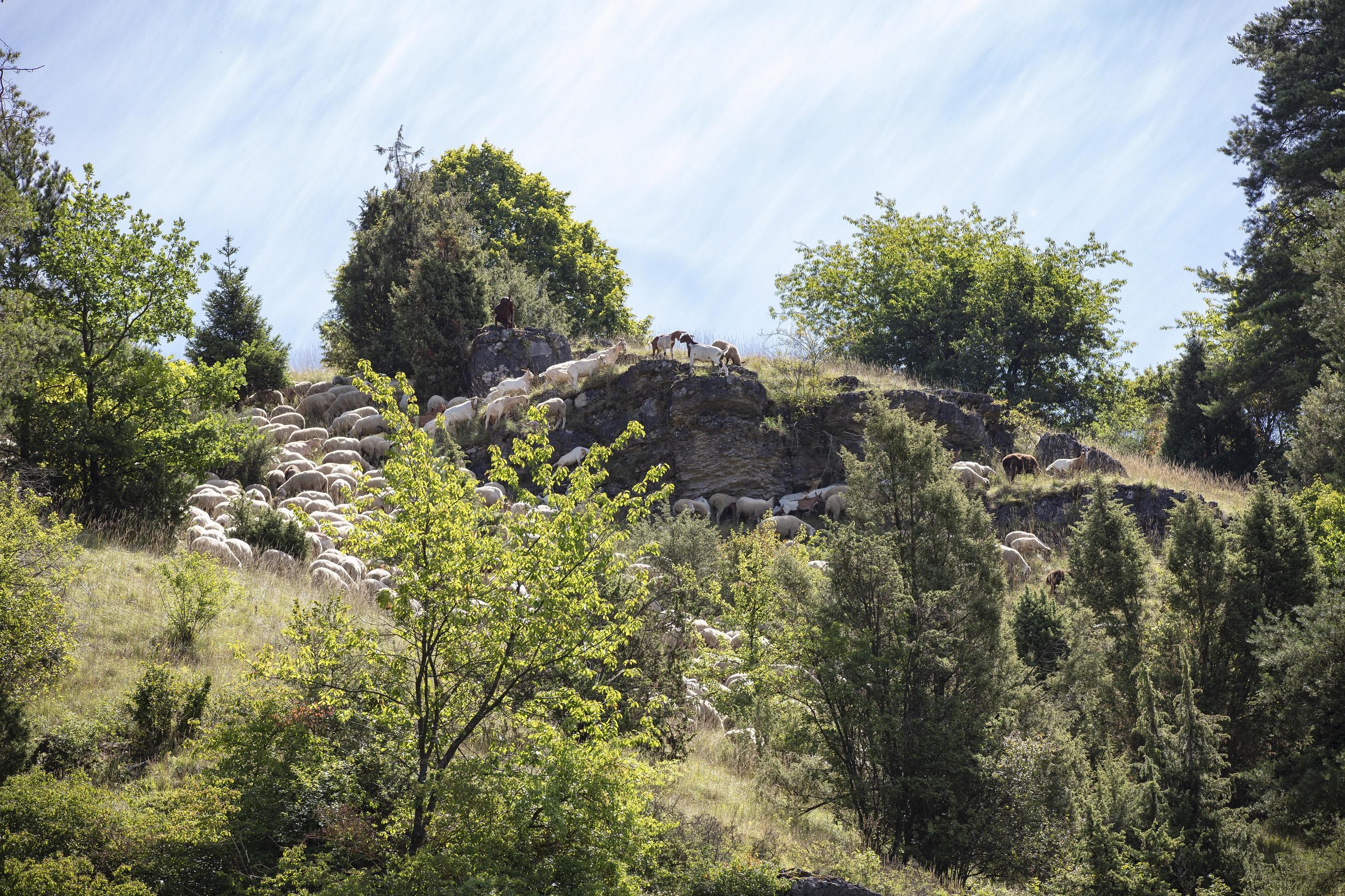 Die unvergleichliche Landschaft des Bayerischen Jura bei Beratzhausen