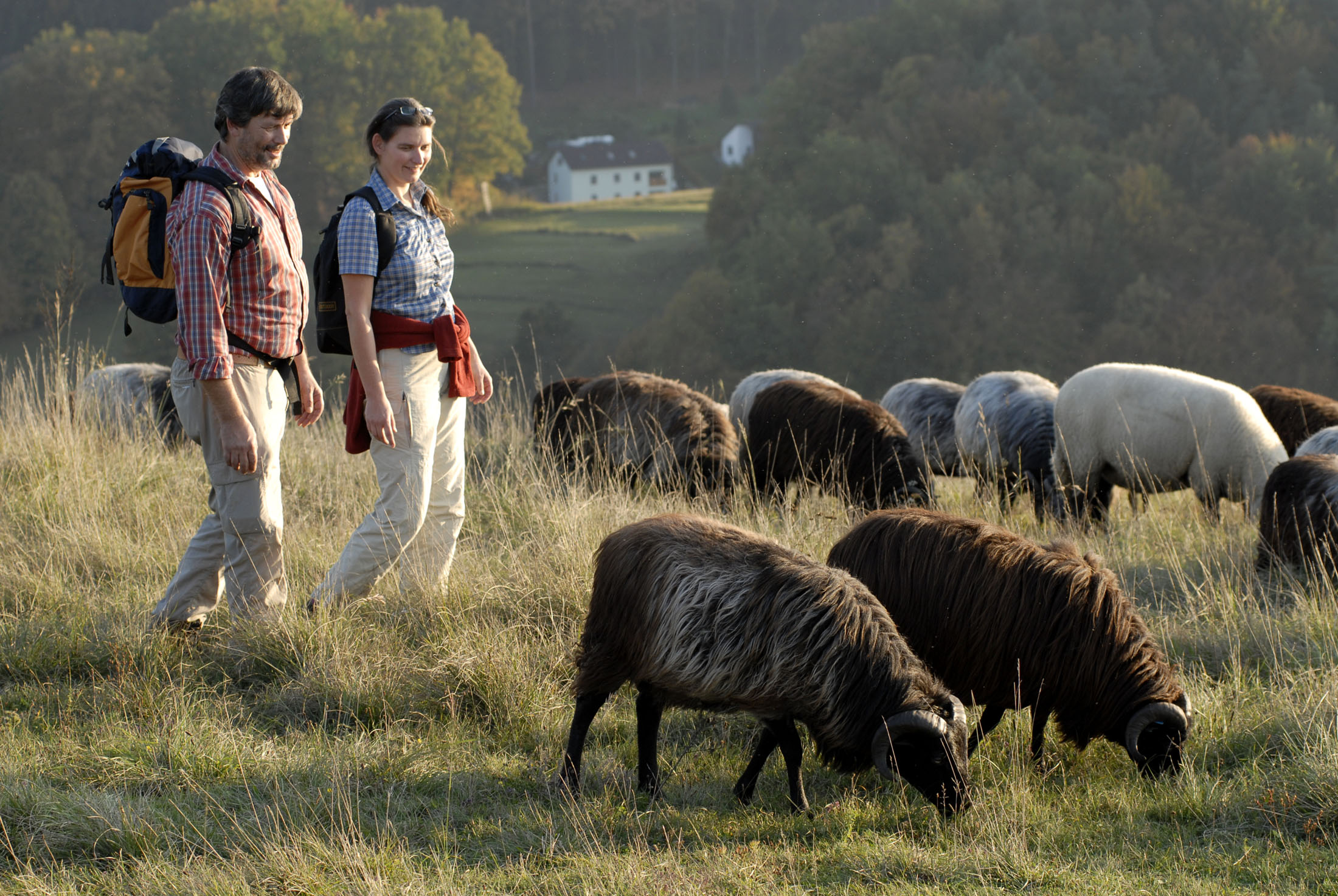 The Jurasteig Trail is a route for all seekers, where you hike along alpine paths and through meadows.