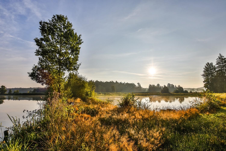 Morgenstimmung in der Teichlandschaft des Oberpfälzer Waldes