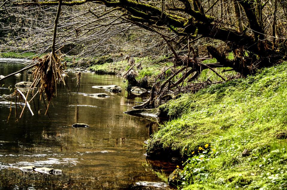 """Die Ilz ist der kleinste der drei Passauer Flüsse und wird wegen ihrer Färbung durch Hochmoore und Fichtenwälder """"Schwarze Perle des Bayerischen Waldes"""" genannt"""