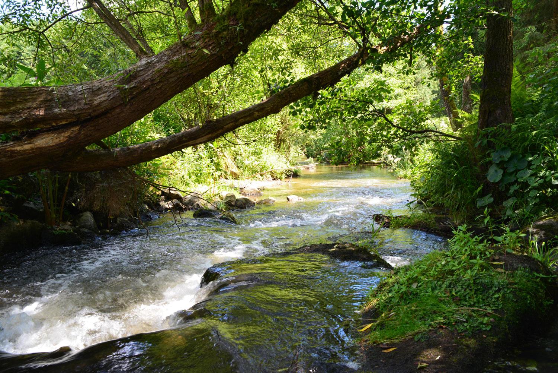 Genuss, Ruhe und herrliche Natur im Bayerischen Wald