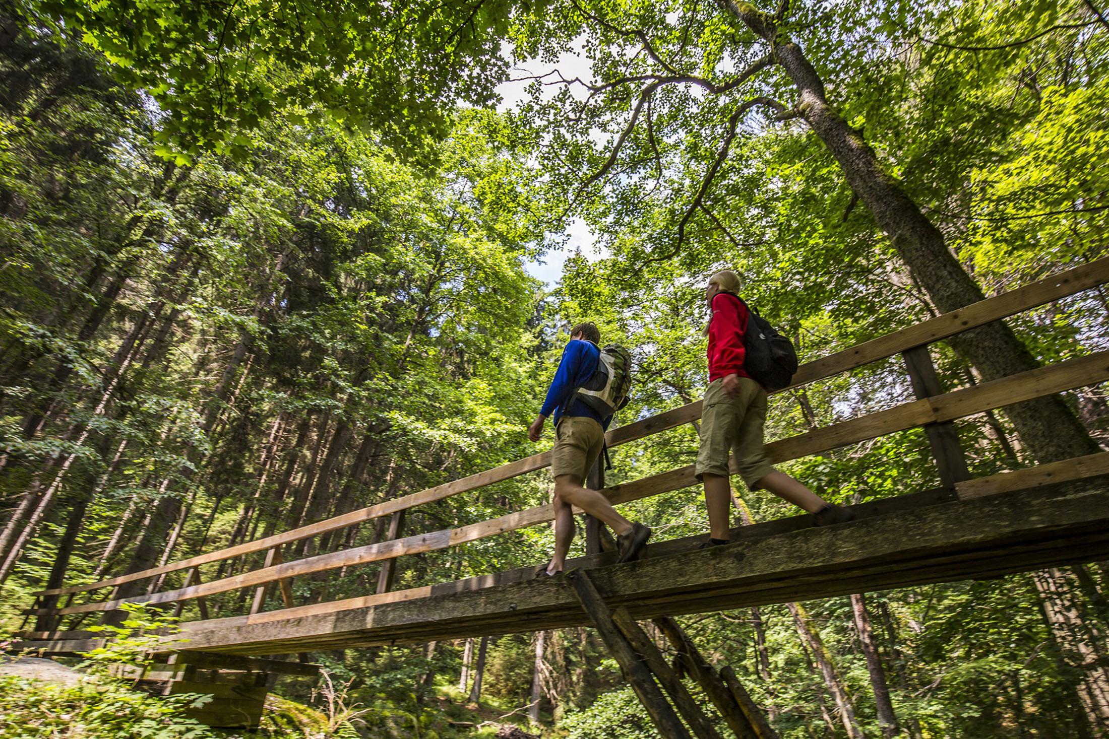 Hiking in the Upper Palatinate Forest - Wandern am Uferpfad im Waldnaabtal