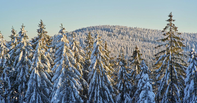 Der Bayerische Wald im Winter