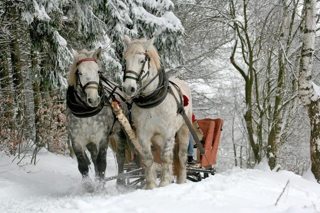 Pferdeschlittenfahrt_Pixabay