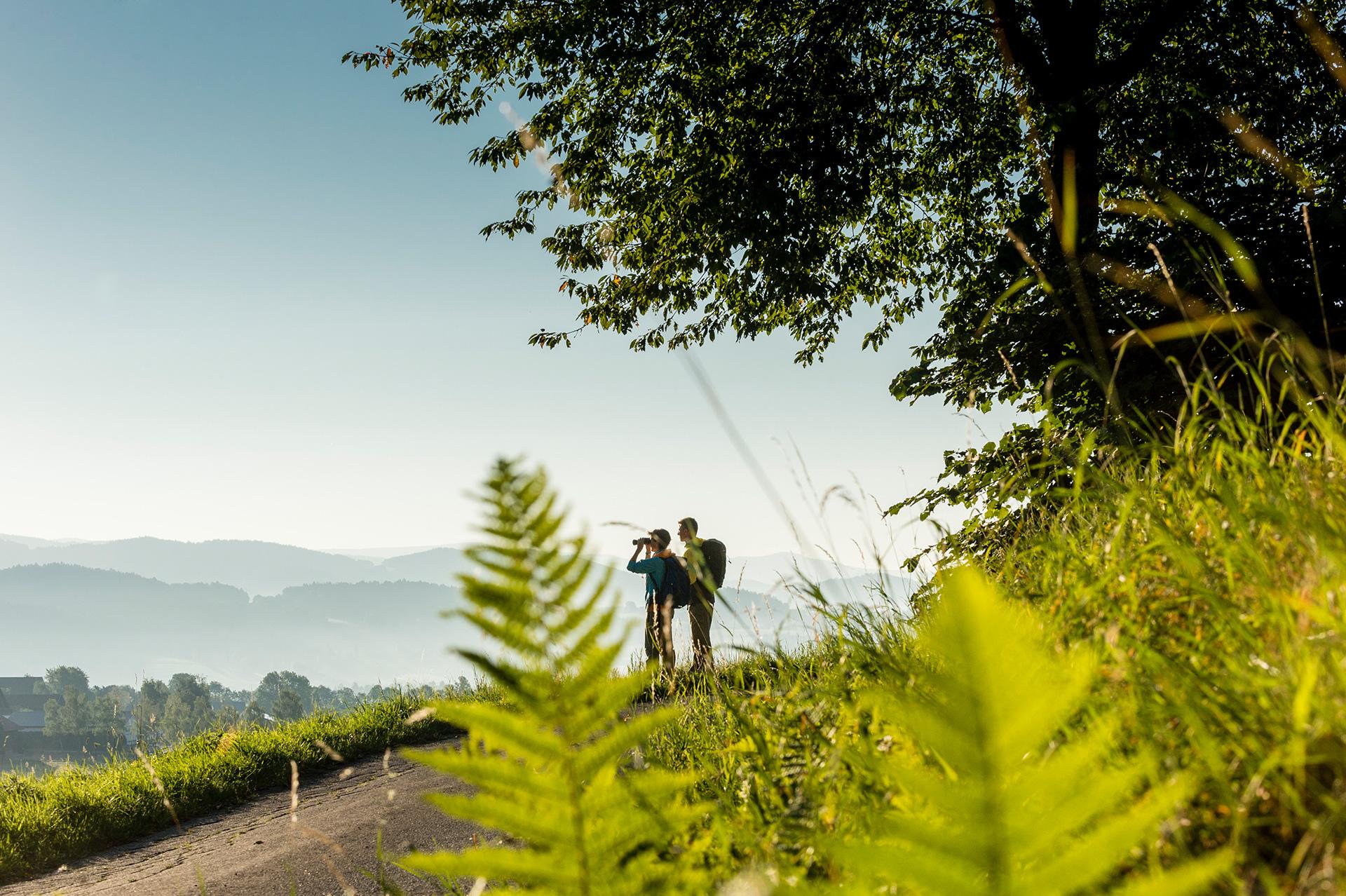 Wanderer genießen auf dem Goldsteig den Blick Richtung Haunkenzell